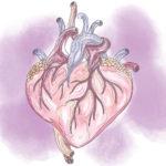 Herz-Check